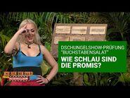 """Prüfung Tag 6 - """"Buchstabensalat"""" - Spinnen-Alarm & Elektro-Schocks - Die große Dschungelshow 2021"""