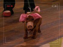 Robyn's Weiner-Dog-Pig.JPG