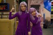 Purpleheads.jpg