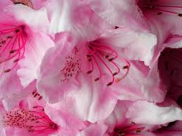 """""""A flower cannot blossom without sunshine, and man cannot live without love"""".jpeg"""