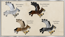 Hippogryph Patterns P2.png