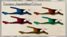 Amphithere Colors.png