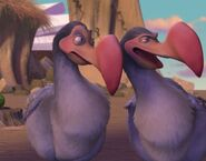 Dodo Bird (4)