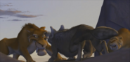 Oscar fighting Dogs