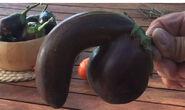 Eggplant penis