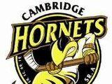 Cambridge Hornets