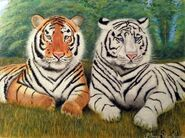 Bengal Tiger and White Tiger
