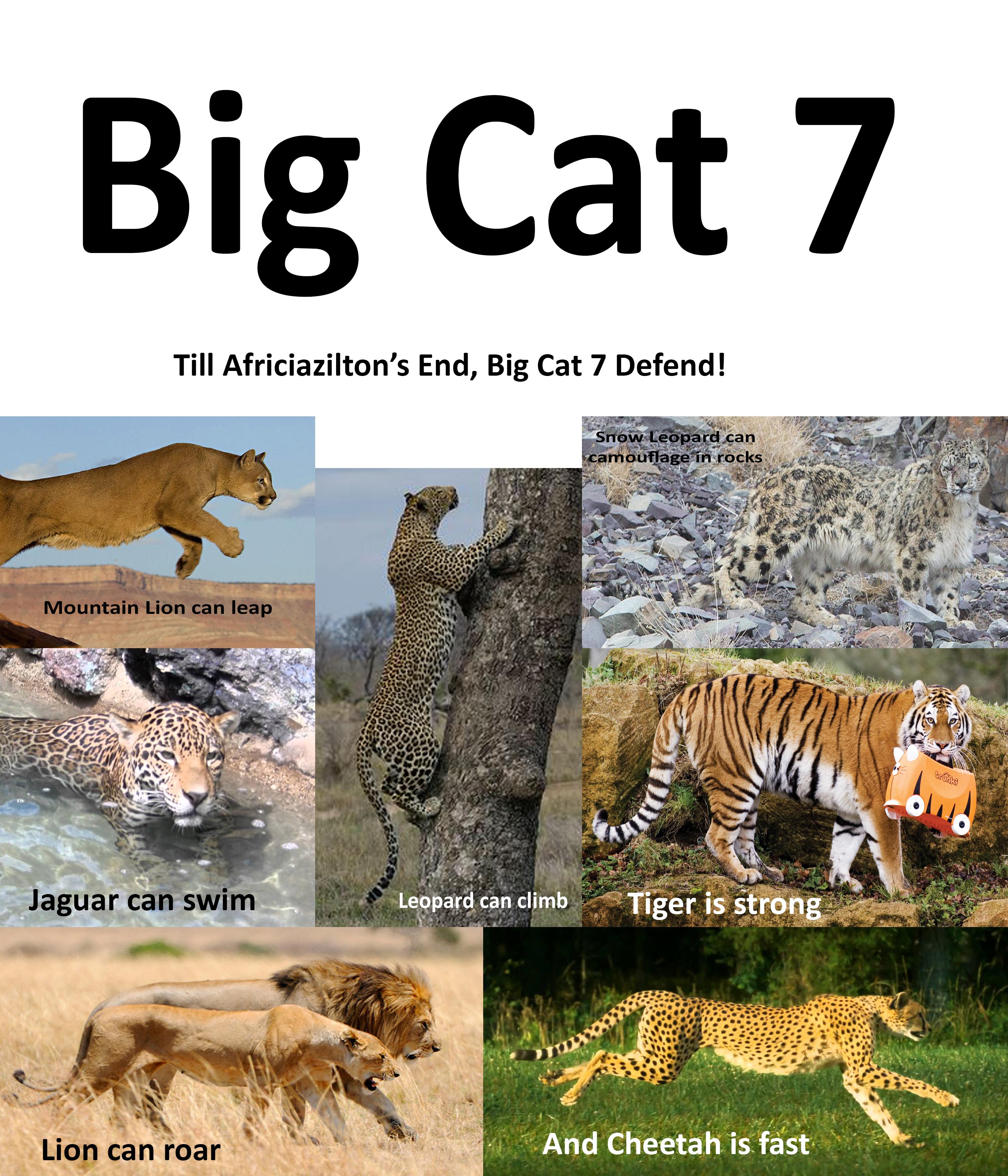 Big Cat 7