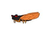 Cindy (Ryker and the Cicada)