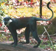European mountain monkey (SciiFii)