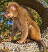 Rat-monkey (SciiFii)