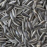 H spartacusii seeds