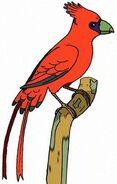 Hawaiian cardinal (SciiFii)