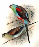 Paradise parrot (SciiFii)