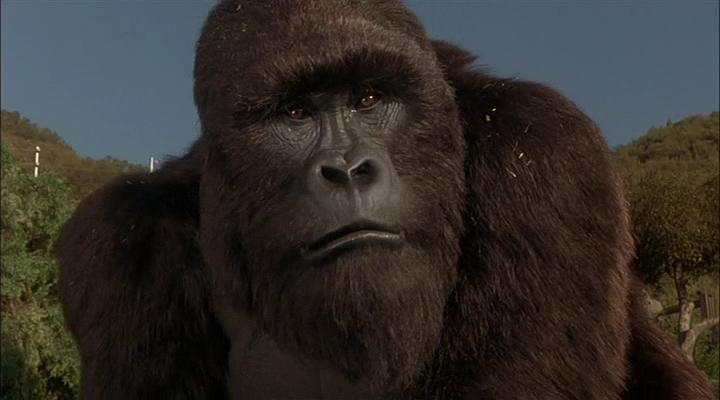 King Kong II: Son of Kong/Gallery
