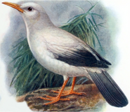 Mauritius starling (SciiFii)