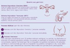 Esquema-genitais.png