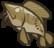 Icon Equipment Korth DeadFish3.png