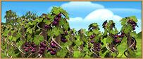 Img wine.jpg