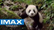 Pandas IMAX® Trailer 2