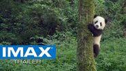 Pandas IMAX® Trailer