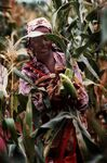 Women in Mozambique with maize