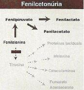 Fenilcetonuria2