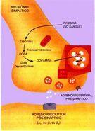 Fenilcetonuria3