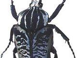 Goliathus albosignatus