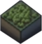 Icon Forest Tile.png