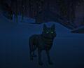 Wolfnighttime
