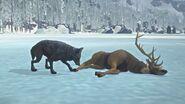 Wolf feeding on deer