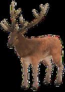 Deer (old)