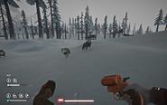 Loups timbrwolf