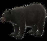 Bear (old)