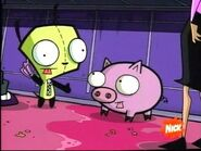 Gir and pig