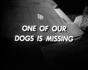 One of our dogs is missing.jpg