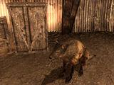 Solo un cane da caccia