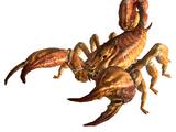 Scorpione centuroide