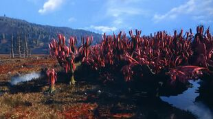 The-Cranberry-Bog-is-Based-on-the-Real-Cranberry-Glades.jpg