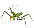 Giant mantis.png