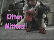 Kitten-mittons2.jpg