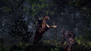 Tw3 horse ride 1
