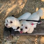 Chaeryeong Pets Chaeri and Chaeso