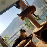 Ryujin Pets Byulie and Dallie
