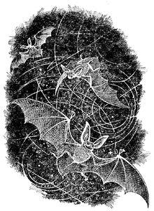 Летучие мыши. Илл. Виктора Бахтина.jpg