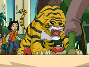 Haiku as a Tiger
