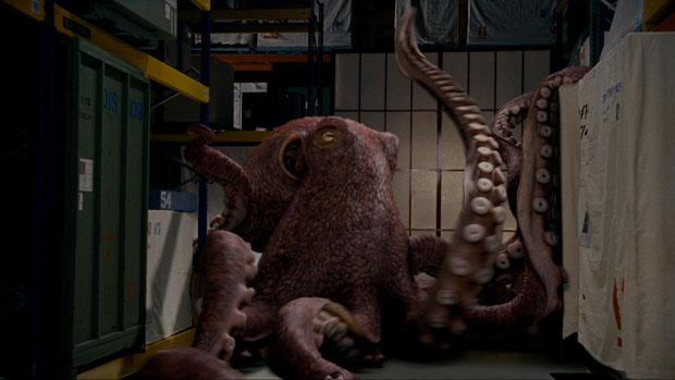 Gigantic Octopus