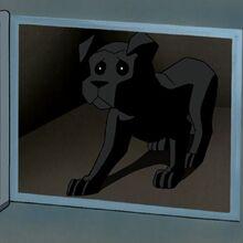 Ace as a Puppy.jpg