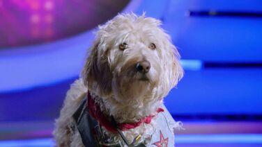 Charlie (Pup Star).jpg